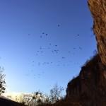 Mišja peč & birds in the sky